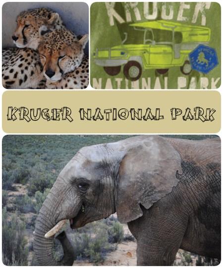 Leopard, elephant, Kruger National Park