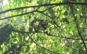 zoomed in monkey