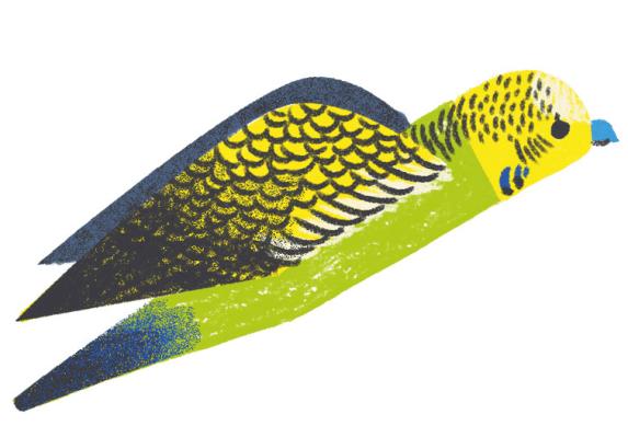 Yellow Green Badgie