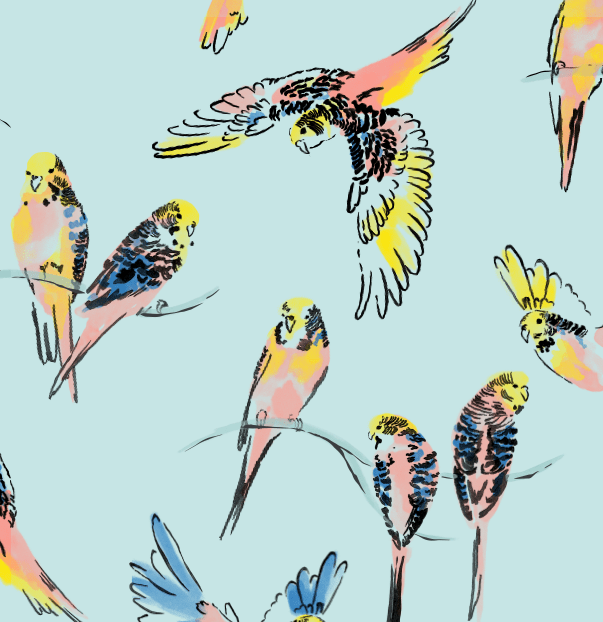 Tea Collection - Aussie Birds - Lorikeet
