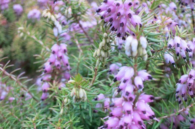 Scotland flora