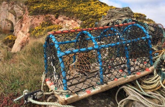 Scotland Crabbing