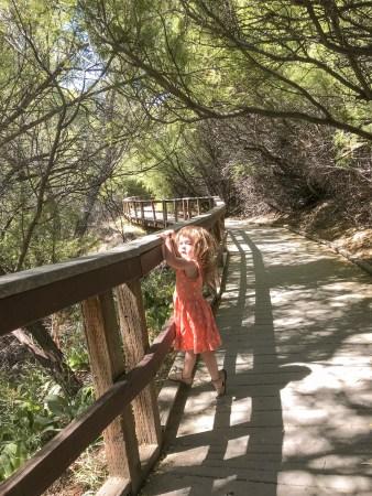 Joshua Tree Big Morongo Canyon Preserve