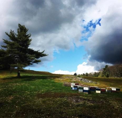 Blueberry Barrens Camden Maine