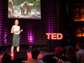 Watching monkeys make friends: Q&A with Lauren Brent