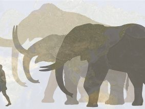 10 fascinating facts about woolly mammoths