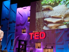9 ways mushrooms could drastically improve the world