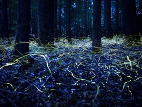 Peak season for fireflies, the meaning of the word 'slash' and architecture made of paper tubes