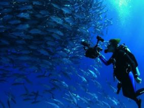 Mission Blue chronicles the life, loves and calling of ocean champion Sylvia Earle