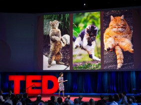 Building an AI with the intelligence of a toddler: Fei-Fei Li at TED2015