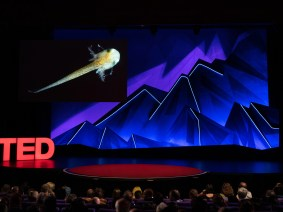 Film beyond borders: The shorts of TEDSummit 2019