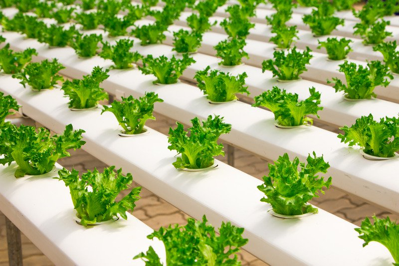 Indoor farm