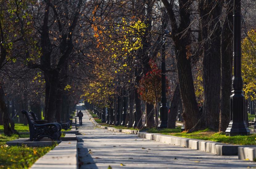 A tree-lined esplanade