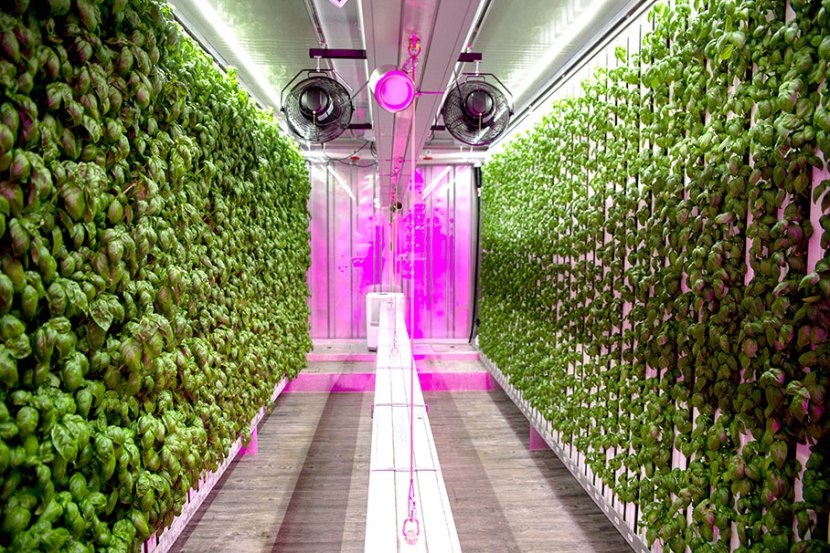One of Square Roots' high production urban farms.