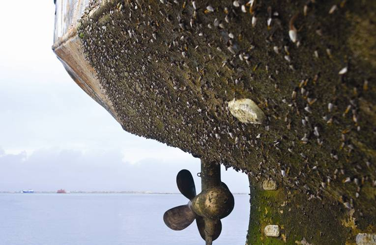 The underside of a ship encrusted with algae and barnacles.