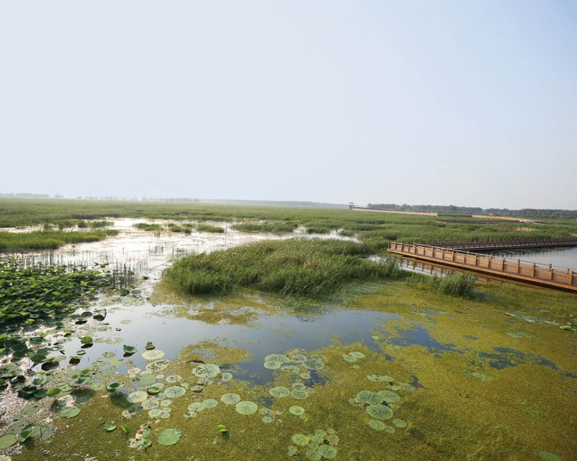 Wetlands are an example of resiliency efforts from parks and cities