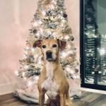 dog and tree