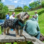 dog standing on picnic table