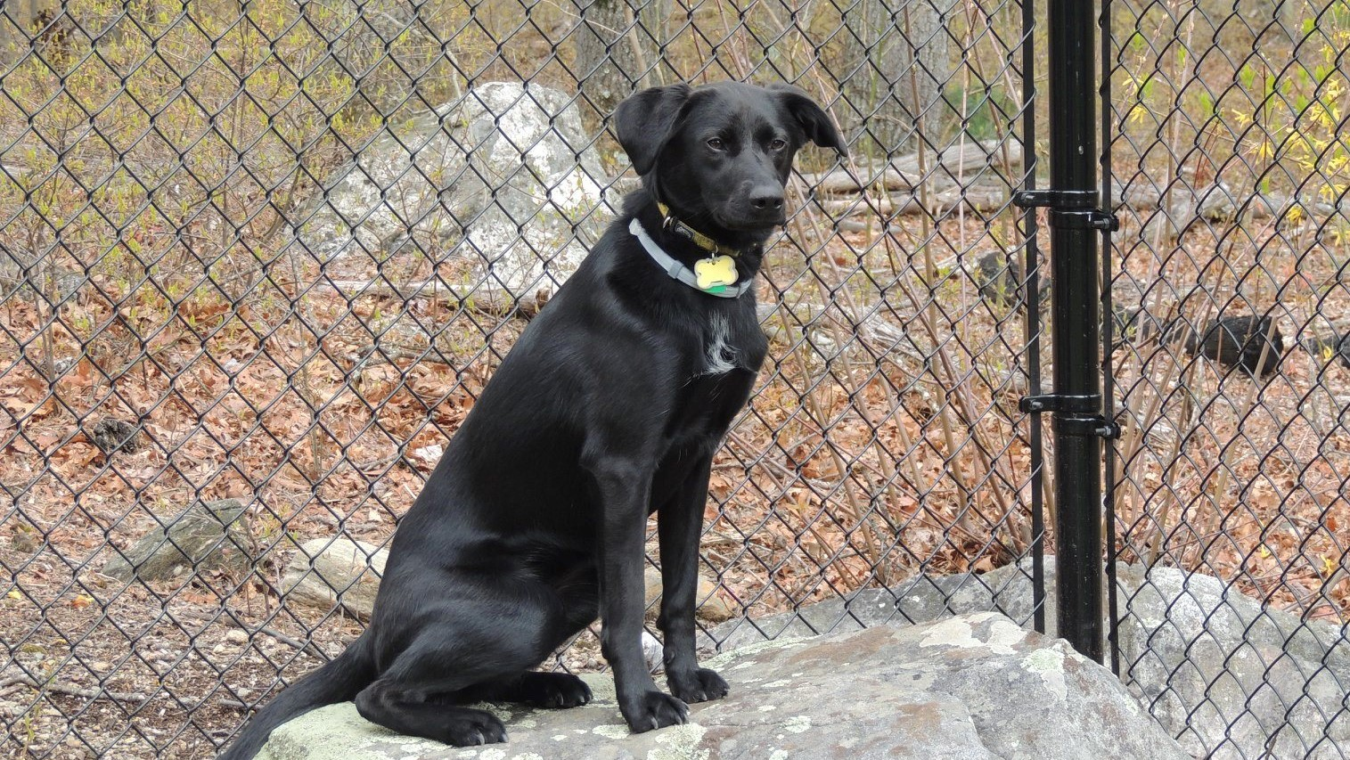 ITS Featured Dog: Memphis