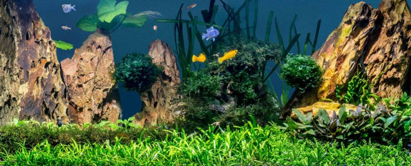 Healthy Aquarium
