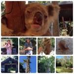 コアラやカンガルを見に行こう。 ー ケアンズの植物園&動物園 ー