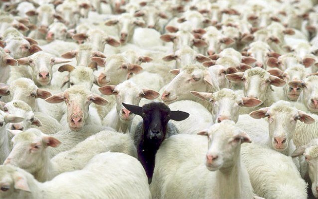 Are You The Black Sheep?
