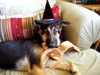 Daft Dog.jpg