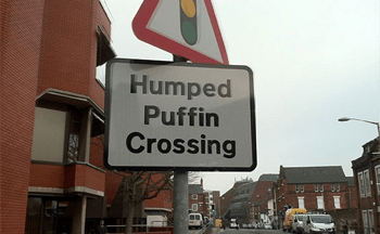 Chesterfield England where Humped Puffins are rather common