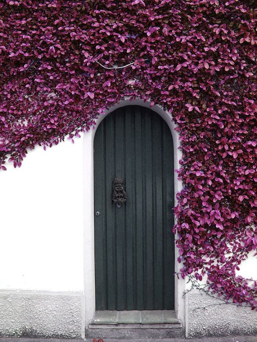 Statement Doors Dark Teal Front Exterior Arched Door Paneled Beadboard with Purple Ivy Facade