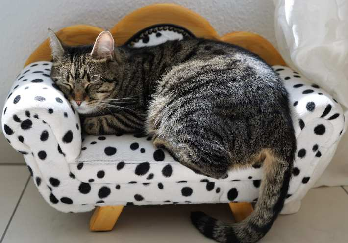 Picture of a tabby cat snoozing on a chair just her size.