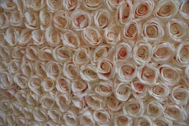 Blush Rose Flower Wall