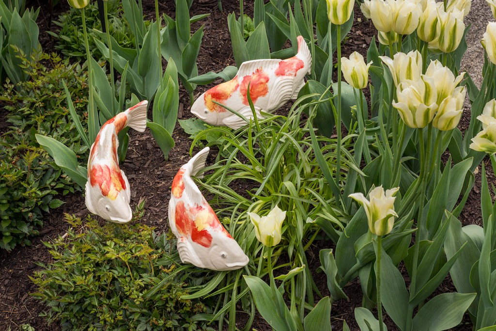3 Orange and white ceramic koi sculptures from Fish in the Garden swim in a flower bed
