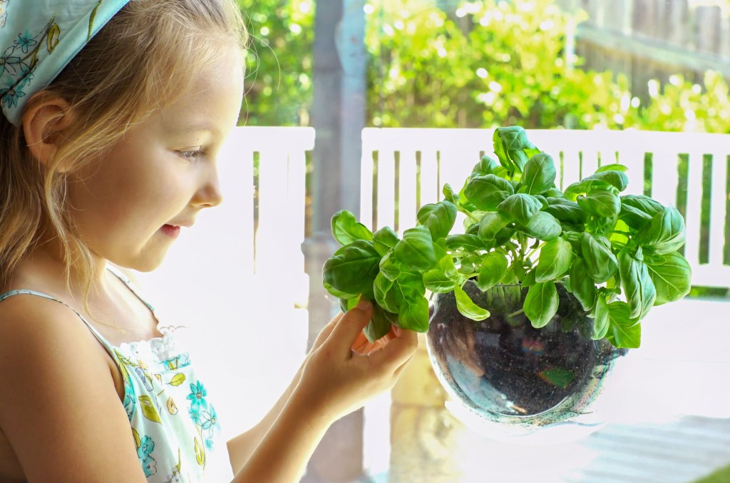 A little girl is seen admiring basil growing from an Urbz window herb planter