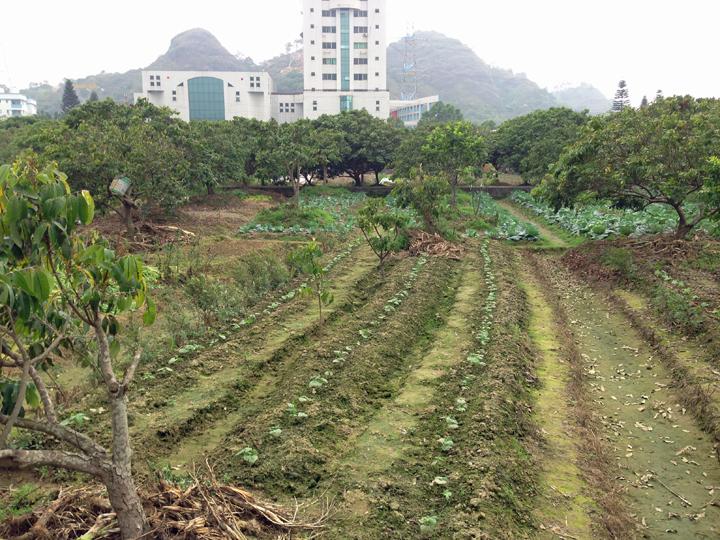 conghua-farm