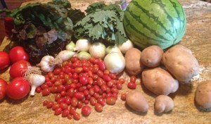Red tomatoes, Swiss chard, lacy kale, watermelon (yes, it's yellow!), potatoes, onions, garlic, and cherry tomatoes---where's my apron?