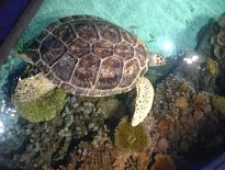 One of the many cool sights at The Baltimore Aquarium!