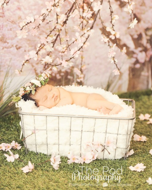 creative-baby-pictures