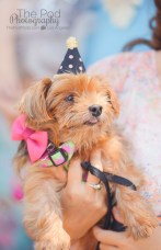 furry-friend-birthday-party-photographer-los-angeles-the-pod-photography-dog-guest