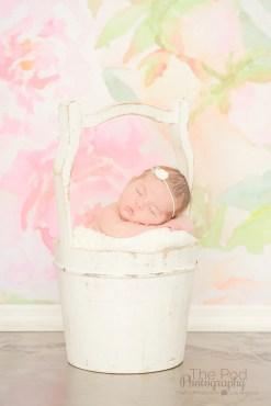 anne-geddes-baby-photographer-los-angeles
