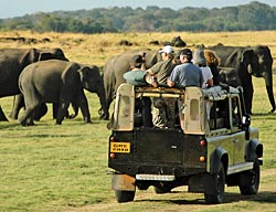 We have wildlife safaris in two different national parks.