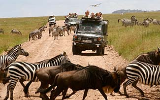 Animals galore, and open topped safari vehicles allow all to sightsee and photograph their experiences.
