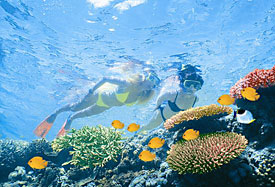 Snorkel, or scuba on the Great Barrier Reef; or if you'd rather stay dry, cruise in a semi-submersible boat above it.