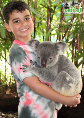 Yes, you can cuddle a koala during our 'Breakfast with the Birds' experience.