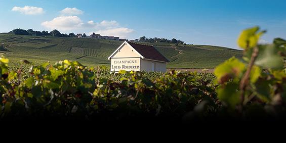 Louis Roederer vineyard