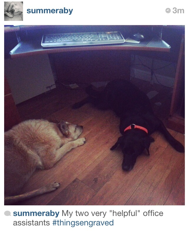 "Photo shared with us from @summeraby of her two ""helpful"" office assistants!"