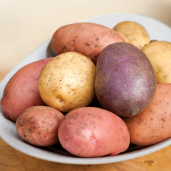 Don't blame gardeners for blight - grow Sárpo potatoes