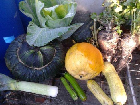 Guest blogger - Steve Woodward - Pumpkins