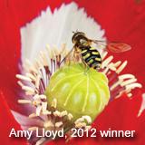 Photo competitions - Plant Portrait
