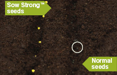 SowStrong® - A Natural Way to Growing Success