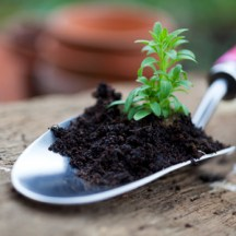 Gardening news - time to start gardening